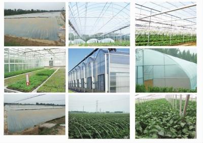 产业结构调整,增强特色农业发展步伐
