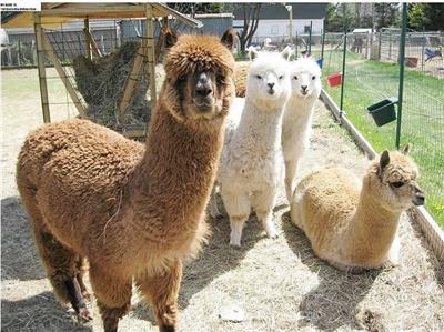 姜堤乐园鲁西最大的动物园即将免费开放