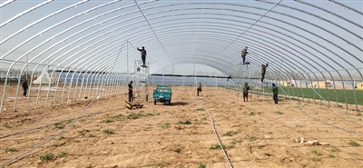 梁水镇乡村振兴办事队第一个项目 投资近百万元的4个蔬菜大棚月底交付使用
