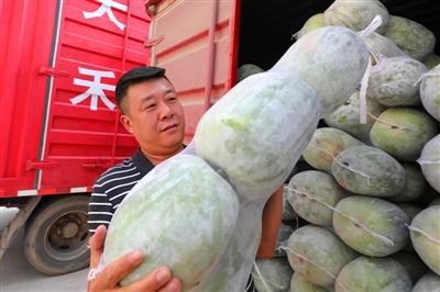 我区一退役军人向北京捐赠两大车蔬菜